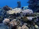Coral reefs at the bottom