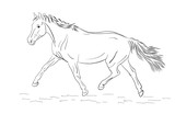 A sketch of a freely trotting horse. - 230511719