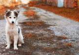 one cute adorable puppy sit on the ground - 230527317