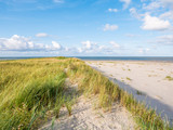 View to North Sea from dunes with marram grass and beach of nature reserve Boschplaat on Terschelling, Netherlands - 230533142