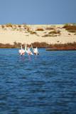 Flamingos in a blue lagoon