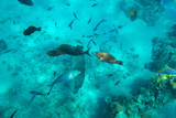 Red Sea underwater scenery with tropical fishes, Egypt - 230576906