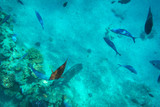 Red Sea underwater scenery with tropical fishes, Egypt - 230576944
