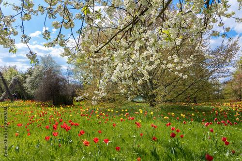 Frühlingswiese - 230586761