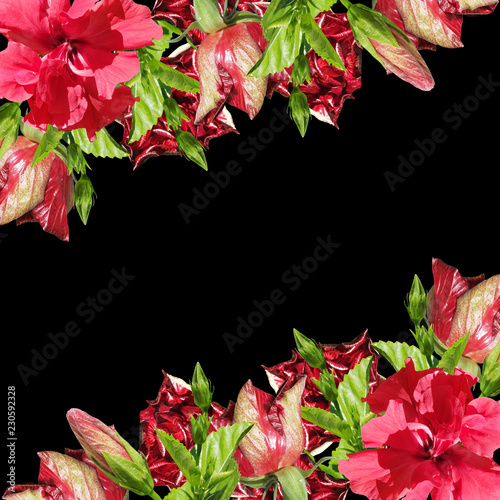 Beautiful floral background of chinese rose  - 230592328