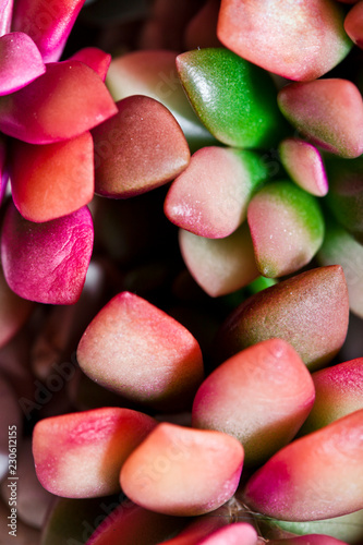 Small pink succulent or cactus. - 230612155