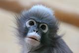 Kleines süsses Äffchen im Zoo - 230629124