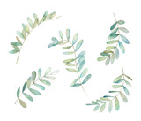 Watercolor eucalyptus  branch. Botanical greenery set. Isolated images on white background. Art print - 230630950