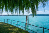 Germany, Lake constance under green willow tree - 230664343