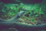 detail of snake head - 230687516