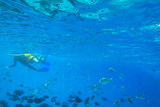 Red Sea underwater scenery with tropical fishes, Egypt - 230702508