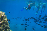 Red Sea underwater scenery with tropical fishes, Egypt - 230702539