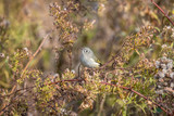 Warbler perched on a plant - 230707926