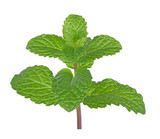 Fresh mint leaf on white background - 230716909