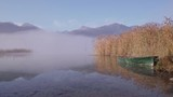 reed in morning fog at lake Hopfensee in the Allgäu Alps in Germany - 230723997