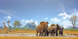 Landscape of a vibrant waterhole in Hwange with herd of elephants playing and a solitary giraffe with a nice cloudy sky