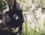 portrait of a rabbit in the grass