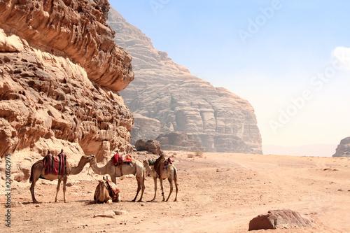 Leinwanddruck Bild Camels in Wadi Rum desert, Jordan
