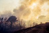 Forest fire, nature disaster - 230771757