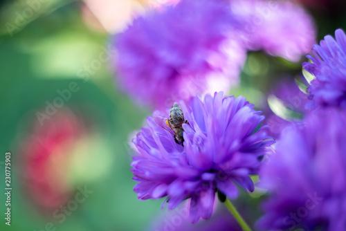 bee on flower - 230775903