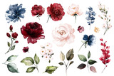 Set watercolor elements of roses collection garden red, burgundy flowers, leaves, branches, Botanic  illustration isolated on white background.  bud of flowers - 230778198
