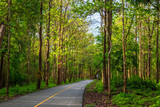 Road in Teak Forest