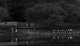 Nara Park - 230800103