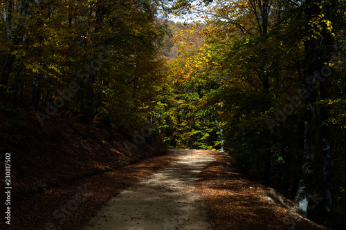 Countryroad through forest in autumn
