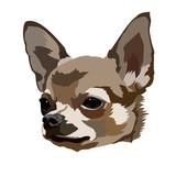 Chihuahua dog head vector