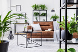 Urban jungle in modern living room interior with big comfortable leather couch and coffee table. - 230827186