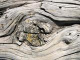 Vieille poutre en bois de mélèze - 230832513