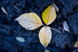 abstract autum leaf - 230838726