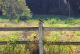 BIRD - VINHEDO - BRAZIL - 230839186