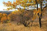 Bright oak tree in autumn day - 230845554