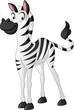 Cartoon cute zebra. Vector illustration of funny happy animal.
