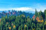 Carpathian mountain sunny landscape - 230884514