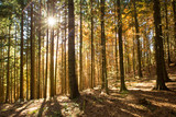 Autumn forest on sunny day - 230884599