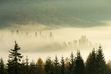Carpathian mountain sunny landscape - 230884705