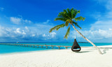 tropical beach in Maldives with few palm trees and blue lagoon - 230884784