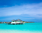 tropical beach in Maldives with few palm trees and blue lagoon - 230884798