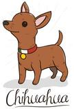 Happy Chihuahua Wearing Patriotic Mexican Collar, Vector Illustration