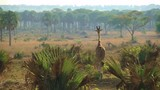 Giraffe strolling through African savanna - 230909365