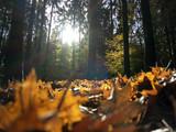 Buntes Herbstlaub im Gegenlicht