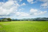 green paddy farm - 230927108