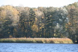 Schilflandschaft am See 2 - 230935581
