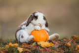 Funny little rabbit with a pumpkin