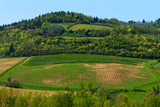 Beautiful Tuscany landscape with vineyards in Chianti in spring. Tuscany, Italy - 230956962