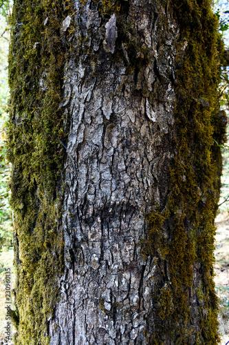 Green grass texture on tree bark - 230960135