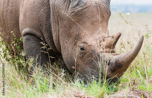 Wall mural rhino kenya