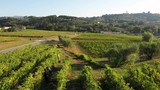 September 2018, Montecarlo, Italy - Aerial, people harvesting vineyards in the fall - 230991586